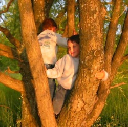 boys on tree.jpg